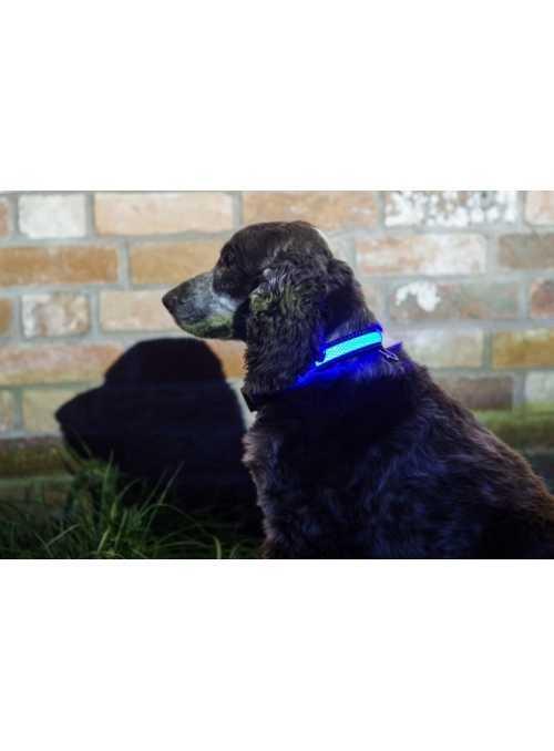 Iluminační obojek pro pejska, modrý