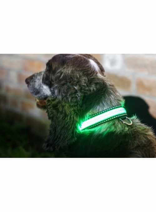 Iluminačný obojok na psíka, zelený