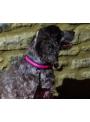 Iluminačný obojok na psíka, ružový