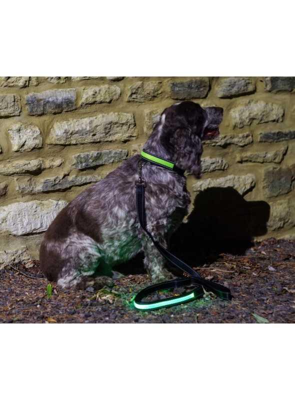 Svietiace vodítko na psíka, zelené