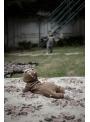 Bambi - detské body s kapucňou, hnedé - 0-6 mesiacov