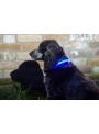 Iluminačný obojok na psíka, modrý - S/M (31/41cm)